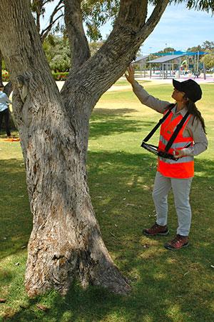 Arboricultural Reports